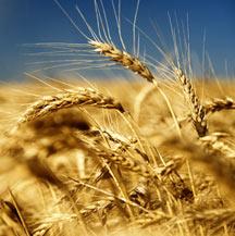 filiera: agricoltura